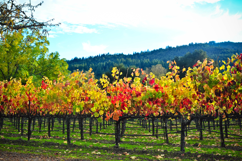 Napa-Valley-in-the-Fall-02.jpg