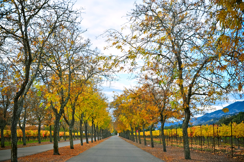 Napa-Valley-in-the-Fall-06.jpg