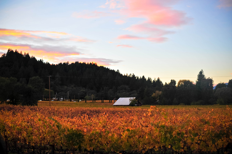 Napa-Valley-in-the-Fall-07.jpg