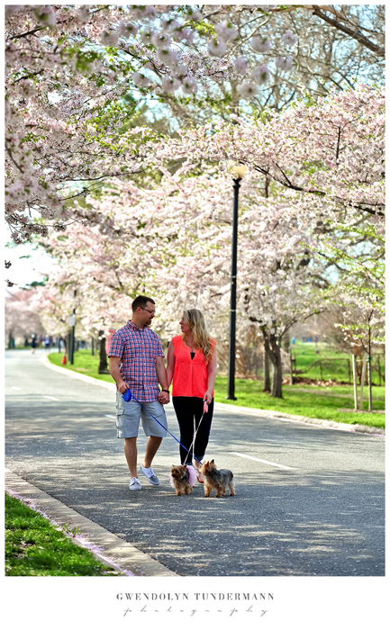 Cherry-Blossoms-DC-Engagement-Photos-04